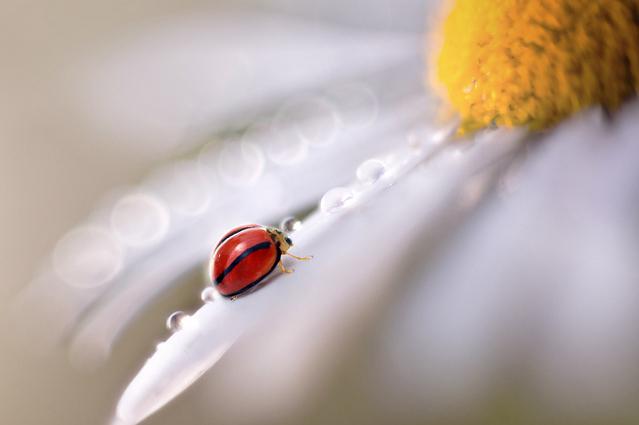 Сюрреальные фото насекомых Pei Ling